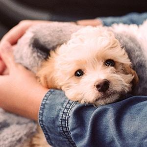 TMM-puppy